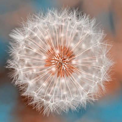 Photograph - Dandelion Plasma by Nicolas Raymond