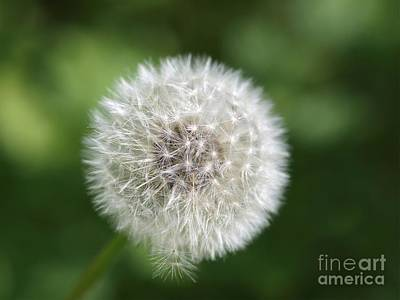 Photograph - Dandelion - Poof by Susan Dimitrakopoulos