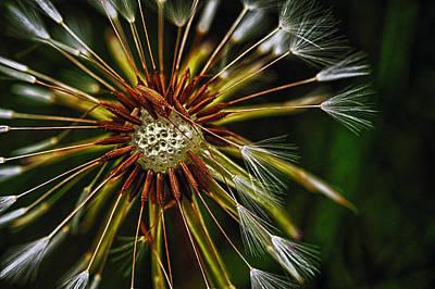 Photograph - Dandelion Puff by Dick Pratt