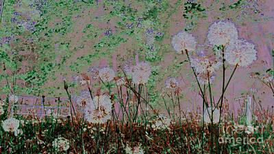 Weeds Digital Art - Dandelion Puffs 3 by Cheryl Raber
