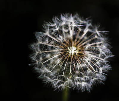 Print featuring the photograph Dandelion Seed by Darcy Michaelchuk