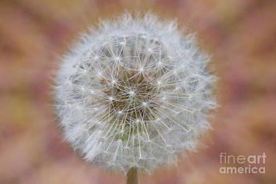 Digital Art - Dandelion Seed by Donna L Munro