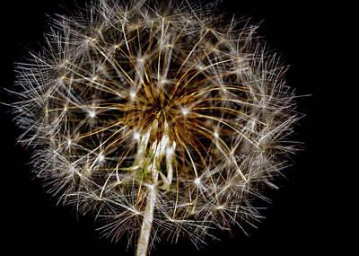 Garden Fruits - Dandelion Seed head by Jeff Jarrett