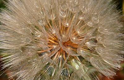 Photograph - Dandelion Seed Head by Kristin Elmquist