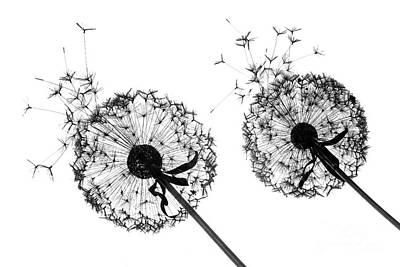 Photograph - Dandelion Silhouette by Julia Gavin