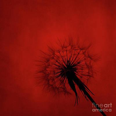 Backdrop Digital Art - Dandelion Silhouette On Red Textured Background by Jelena Jovanovic