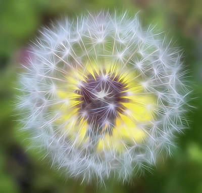 Photograph - Dandelion Soft Square by Terry DeLuco