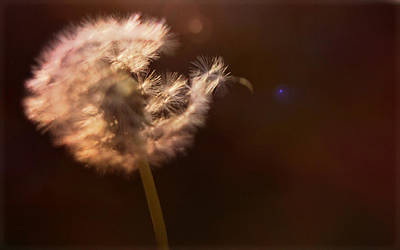 Mixed Media - Dandelion by Stephanie Hollingsworth