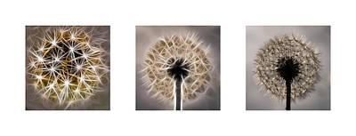 Medford Photograph - Dandelion Triptych by Louis Dallara