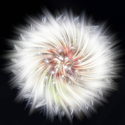Photograph - Dandelion Twirl by Richard Macquade