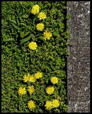 Photograph - Dandelion Walk by Paul Mashburn