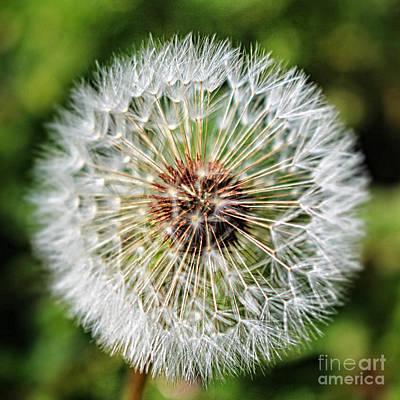 Photograph - Dandelion Wish by Ella Kaye Dickey