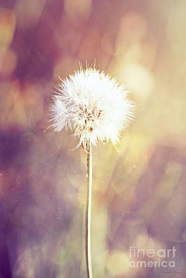Photograph - Dandelion Wishes by Linda Lees