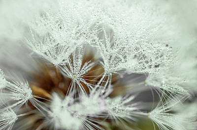 Photograph - Dandelion With Droplets II by Paulo Goncalves