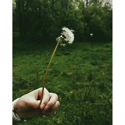 Photograph - #dandelionclock #dandelion #nature by Natalie Anne
