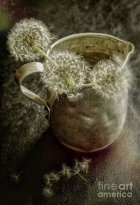 Photograph - Dandelions In Pitcher-textured by Kathleen K Parker