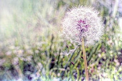 Dandilion Wishes Art Print