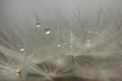 Photograph - Dandy Dew Two 2 by Brian Hale