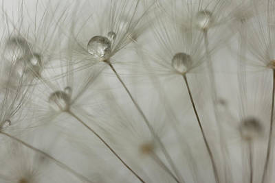 Photograph - Dandy Drops by Brian Hale