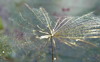 Photograph - Dandy Seed Pod by Barbara St Jean