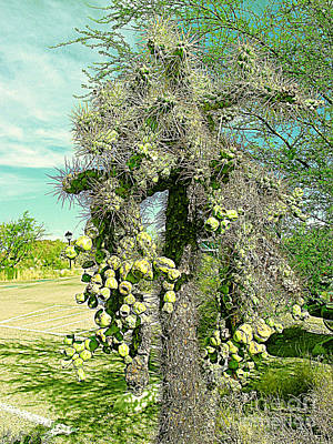 Photograph - Danger Prickly Ouch Tree Tucson Az by Merton Allen