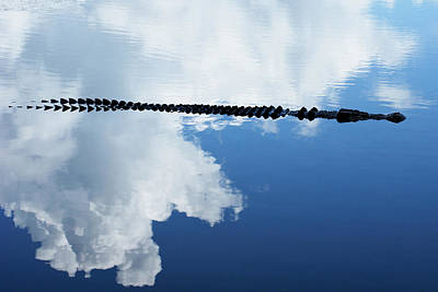 Print featuring the photograph Dangerous Reflection Saltwater Crocodile by Gary Crockett