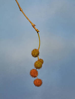 Photograph - Dangle by Fraida Gutovich