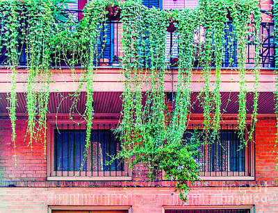 Photograph - Dangling Vines On A Balcony by Frances Ann Hattier