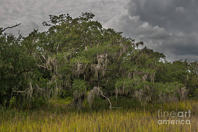 Photograph - Daniel Island Live Oak Spanish Moss Marsh View by Dale Powell