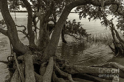 Photograph - Daniel Island Roots by Dale Powell