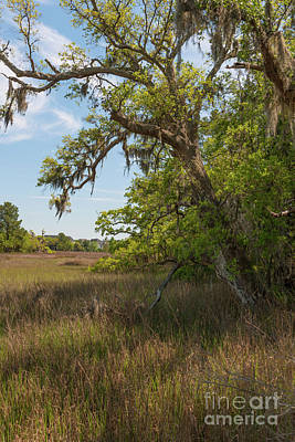 Photograph - Daniel Island Salt Marsh Vertical by Dale Powell