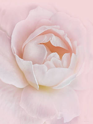 Photograph - Danielle's Pink Rose Flower by Jennie Marie Schell