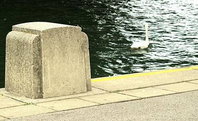 Photograph - Danube River Swan by Ian  MacDonald