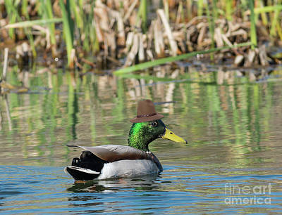 Photograph - Dapper Duck by Les Palenik