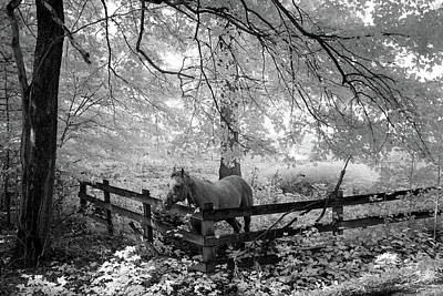 Photograph - Dapple Faced Horse I by Paul Seymour