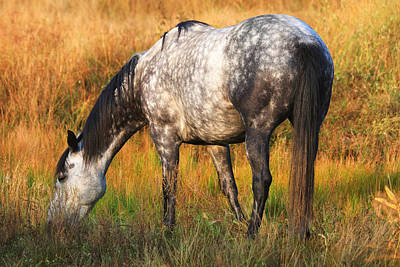 Gray Horses Photograph - Dapple Grey by Donna Kennedy