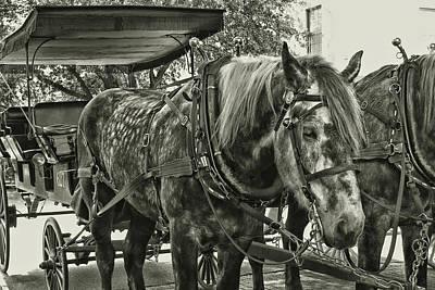Photograph - Dapple Grey by JAMART Photography