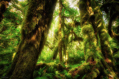 Photograph - Dappled Dreams by Rick Furmanek