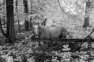 Photograph - Dappled Face Horse II by Paul Seymour