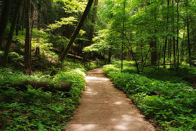 Dappled Light Photograph - Dappled Forest Magic by Rachel Cohen