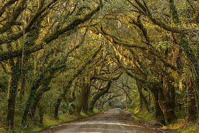 Dirt Roads Photograph - Dappled Morning by Mike Lang
