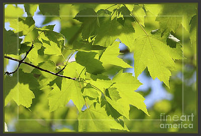 Photograph - Dappled Sunlight Framed by Sandra Huston