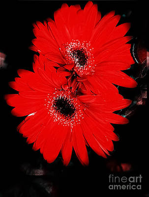 Daisy Photograph - Dare To Wear Red by Heather Joyce Morrill