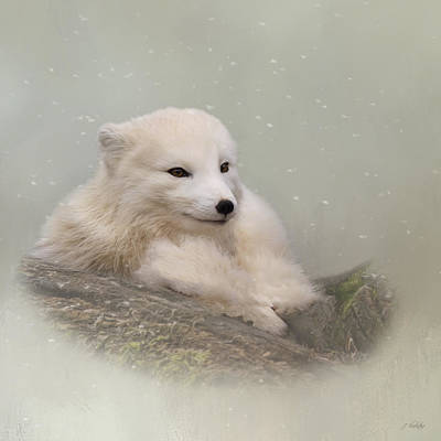 Painting - Daring The Soul - Arctic Fox Art by Jordan Blackstone