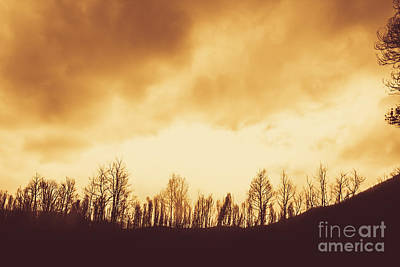 Art Print featuring the photograph Dark Afternoon Woodland by Jorgo Photography - Wall Art Gallery