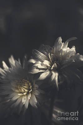 Photograph - Dark Artistic Flower Fine Art. Dawn Of Spring by Jorgo Photography - Wall Art Gallery