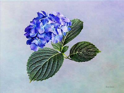 Photograph - Dark Blue Hydrangea With Leaves by Susan Savad