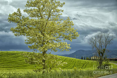 Photograph - Dark Clouds And Green Tree by Patricia Hofmeester