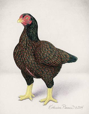 Barnyard Drawing - Dark Cornish Hen by Katherine Plumer