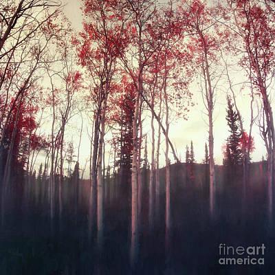 Dark Deep Woods Art Print
